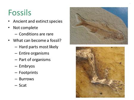 Fossils Ancient and extinct species Not complete – Conditions are rare What can become a fossil? – Hard parts most likely – Entire organisms – Part of.