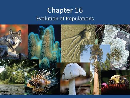 Chapter 16 Evolution of Populations. Variation and Gene Pools Genetic variations (differences) are studied in populations (group of individuals of the.