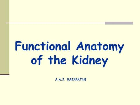 Functional Anatomy of the Kidney A.A.J. RAJARATNE.