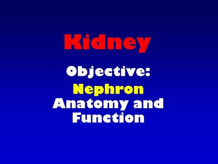 Kidney Objective: Nephron Anatomy and Function. Nephron Anatomy consists of Renal corpuscle Renal tubule.