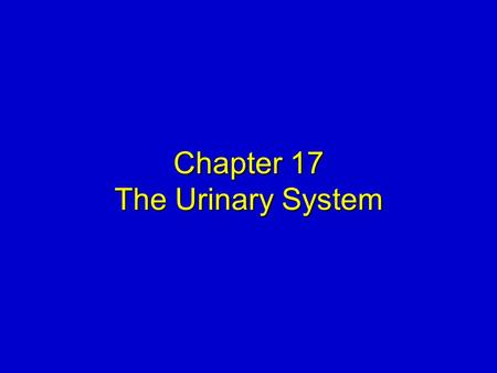 Chapter 17 The Urinary System. Elsevier items and derived items © 2008, 2004 by Mosby, Inc., an affiliate of Elsevier Inc. Slide 2 KIDNEYS  Location—under.