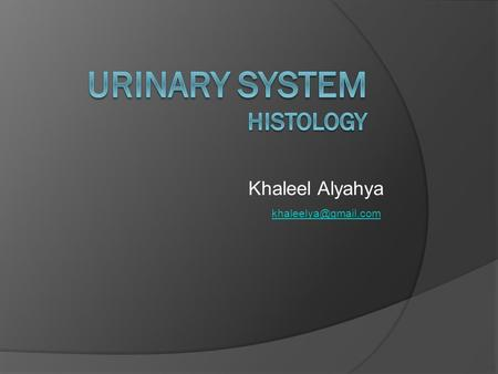 Khaleel Alyahya Urinary System  Kidney  Ureters  Urinary Bladder  Urethra.
