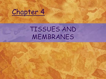 TISSUES AND MEMBRANES Chapter 4. © 2004 Delmar Learning, a Division of Thomson Learning, Inc. TISSUES 4 Main types of tissues: –Epithelial tissue protects.