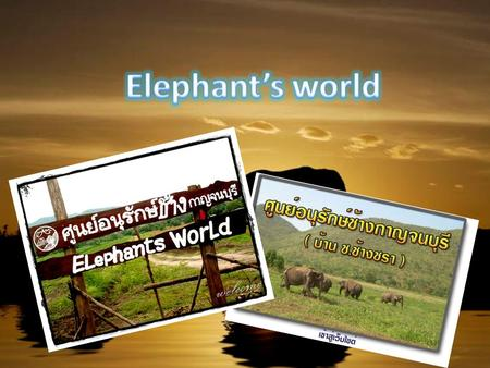 Elephant's World is an elephant conservation camp established by Dr. vet. Samart Prasitpon in 2008. Elephant's World take care aged elephants which.