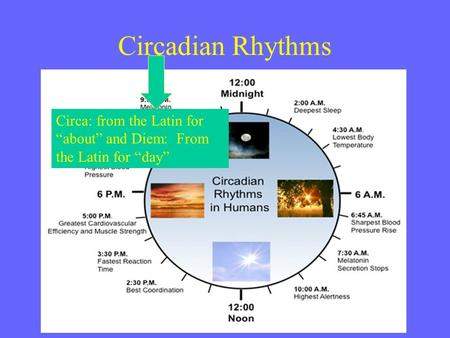 "Circadian Rhythms Circa: from the Latin for ""about"" and Diem: From the Latin for ""day"""