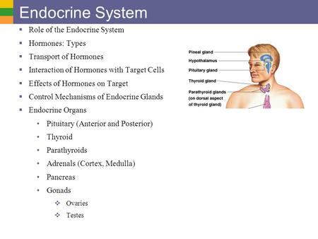 Endocrine System Role of the Endocrine System Hormones: Types