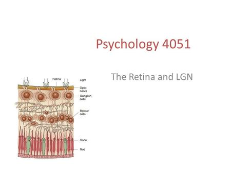 Psychology 4051 The Retina and LGN. Retino-Geniculate-Cortical Pathway.
