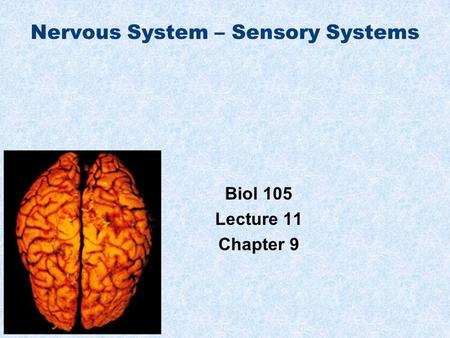 Nervous System – Sensory Systems Biol 105 Lecture 11 Chapter 9.