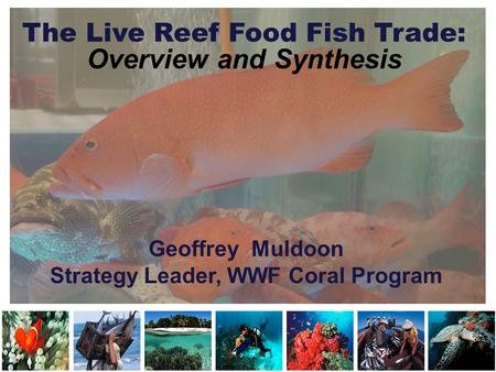 The Live Reef Food Fish Trade: Overview and Synthesis Geoffrey Muldoon Strategy Leader, WWF Coral Program.