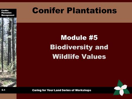 Conifer Plantation Management Caring for Your Land Series of Workshops Conifer Plantations Module #5 Biodiversity and Wildlife Values 5-1.