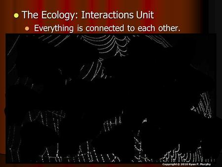 The Ecology: Interactions Unit The Ecology: Interactions Unit Everything is connected to each other. Everything is connected to each other. Copyright ©