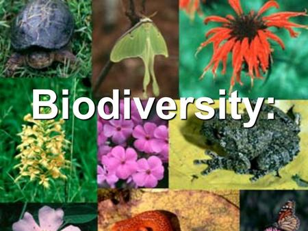 Biodiversity:. AB Which do you like better? AB What do you think biodiversity means?