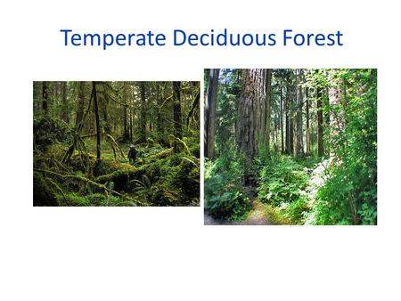 Temperate Deciduous Forest. Boreal Forest Ecosystem.