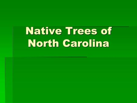 Native Trees of North Carolina. Loblolly Pine Pinus taeda DESCRIPTION  Leaves 6 to 9 inches long  Bark on young trees dark in color and deeply furrowed.