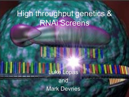 High throughput genetics & RNAi Screens Luke Lopas and Mark Devries.