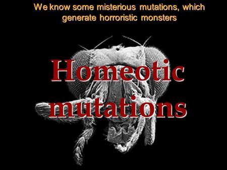 Homeotic mutations We know some misterious mutations, which generate horroristic monsters.