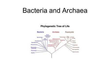 Bacteria and Archaea. Prokaryotes Structure, Function, and Reproduction Nutritional and Metabolic Diversity Phylogeny of Prokaryotes Ecological Impact.