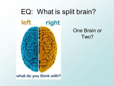 EQ: What is split brain? One Brain or Two?. BR: Read and annotate pg.81 and add to the diagram at the bottom Do you think you are more right or left brained?