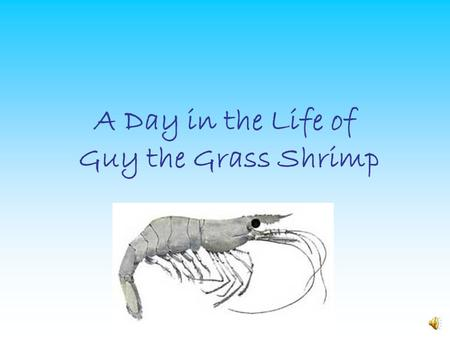 A Day in the Life of Guy the Grass Shrimp Hello guys, my name is Guy the Grass Shrimp. Wanna know what a day in my life is like? We'll I'm here to tell.