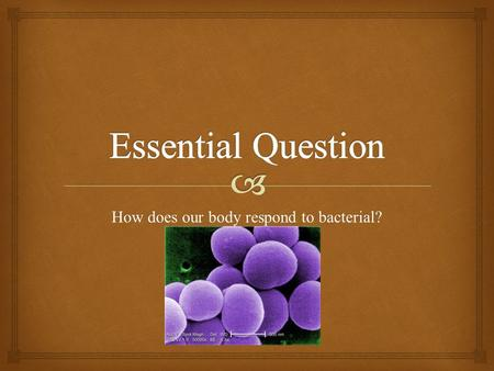 How does our body respond to bacterial?. What is Staphylococcus? How does it enters our body? How can one prevent from entering the body?