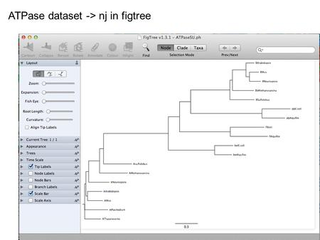 ATPase dataset -> nj in figtree. ATPase dataset -> muscle -> phyml (with ASRV)– re-rooted.