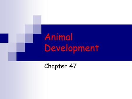 Animal Development Chapter 47. The Miracle of Life Human embryo.