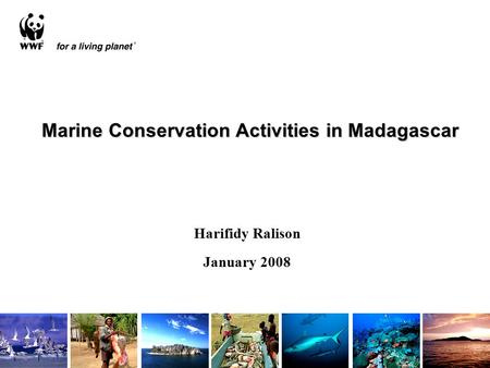 Marine Conservation Activities in Madagascar Harifidy Ralison January 2008.