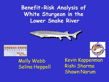 Kevin Kappenman Rishi Sharma Shawn Narum Benefit-Risk Analysis of White Sturgeon in the Lower Snake River Molly Webb Selina Heppell.