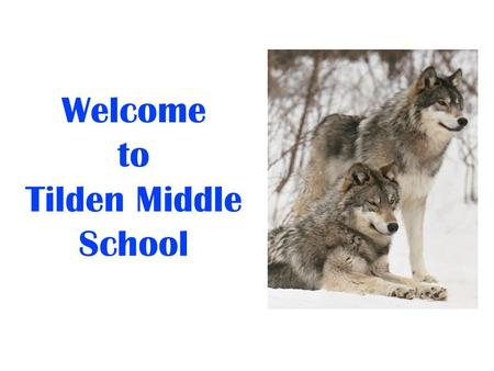 Welcome to Tilden Middle School. We Are Here To Support You! Irina LaGrange, Principal Jeff Leaman, Assistant Principal Mary Bee Ciminelli, Counselor.