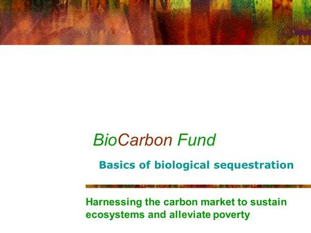 BioCarbon Fund Harnessing the carbon market to sustain ecosystems and alleviate poverty Basics of biological sequestration.