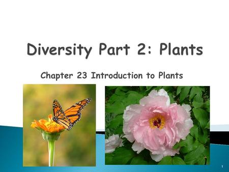 Chapter 23 Introduction to Plants 1. 1. Autotrophs 2. Multicellular 3. Eukaryotes 4. Cell Wall is made out of Cellulose 2.