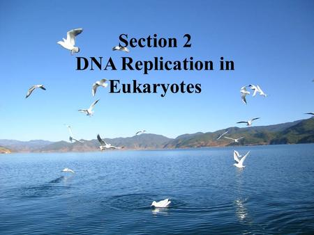 Section 2 DNA Replication in Eukaryotes. Biomolecules involved in DNA replication  Substrate: dNTPs (dATP, dGTP, dCTP, dTTP)  Template unwinding parent.