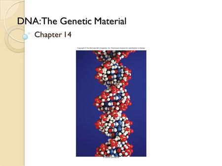 DNA: The Genetic Material Chapter 14. Griffith's experiment with Streptococcus pneumoniae ◦ Live S strain cells killed the mice ◦ Live R strain cells.