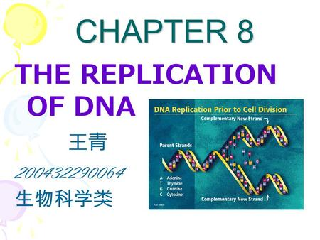 CHAPTER 8 CHAPTER 8 THE REPLICATION OF DNA 王青 200432290064 生物科学类.