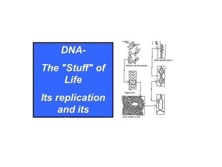 DNA- The Stuff of Life Its replication and its unending repair.