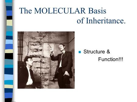 The MOLECULAR Basis of Inheritance. n Structure & Function!!!