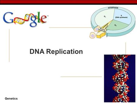 Genetics 2007-2008 DNA Replication Genetics Why do cells divide…  for reproduction  One celled organisms (clones)  for growth & development  From.