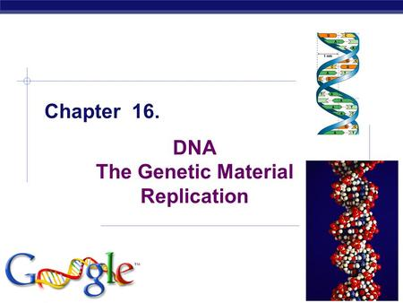 AP Biology 2005-2006 Chapter 16. DNA The Genetic Material Replication.