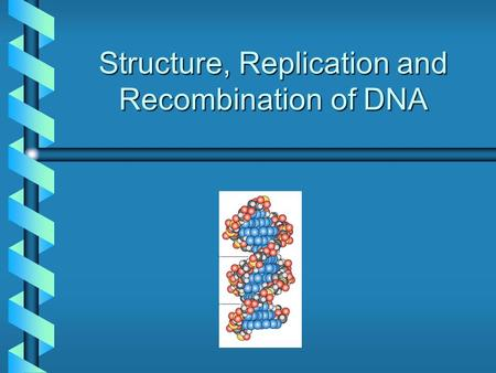 Structure, Replication and Recombination of DNA. Information Flow From DNA DNA RNA transcription Protein translation replication.