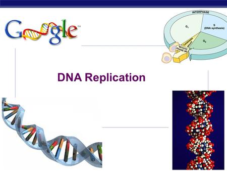 AP Biology 2007-2008 DNA Replication STRUCTURE OF NUCLEIC ACIDS Sugar can be DEOXYRIBOSE (DNA) RIBOSE (RNA) Built from NUCLEOTIDE SUBUNITS NITROGEN BASES.