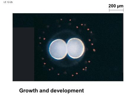 LE 12-2b Growth and development 200 µm. LE 12-2c Tissue renewal 20 µm.