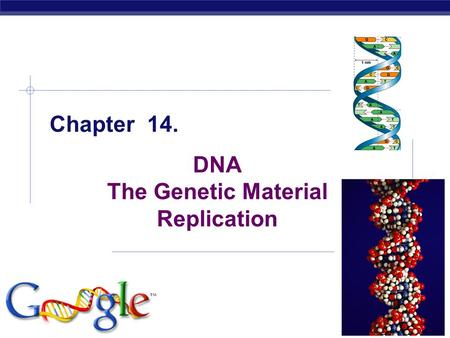 Chapter 14. DNA The Genetic Material Replication.