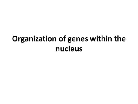 Organization of genes within the nucleus. Nucleus.