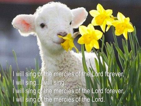 I will sing of the mercies of the Lord forever,I will sing of the mercies of the Lord forever, I will sing...I will sing.I will sing...I will sing. I will.