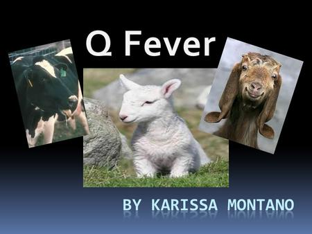  Q fever is a disease caused by infection with bacteria called Coxiella burnetii which affects both humans and animals. This organism is uncommon but.