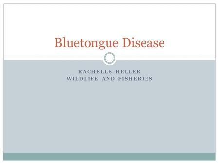 RACHELLE HELLER WILDLIFE AND FISHERIES Bluetongue Disease.