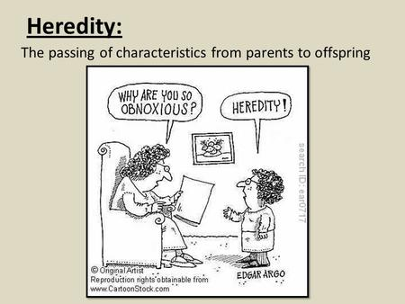 Heredity: The passing of characteristics from parents to offspring.
