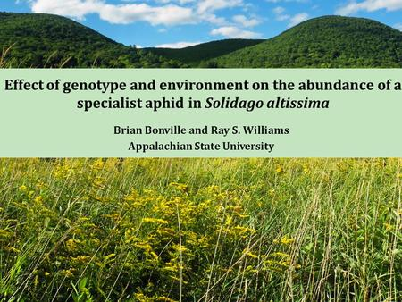 Effect of genotype and environment on the abundance of a specialist aphid in Solidago altissima Brian Bonville and Ray S. Williams Appalachian State University.