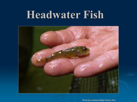 Headwater Fish Photo by Crestwood High School, Ohio.