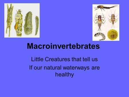Little Creatures that tell us If our natural waterways are healthy